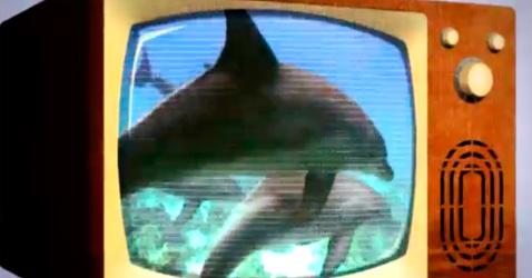 unisantos-golfinho